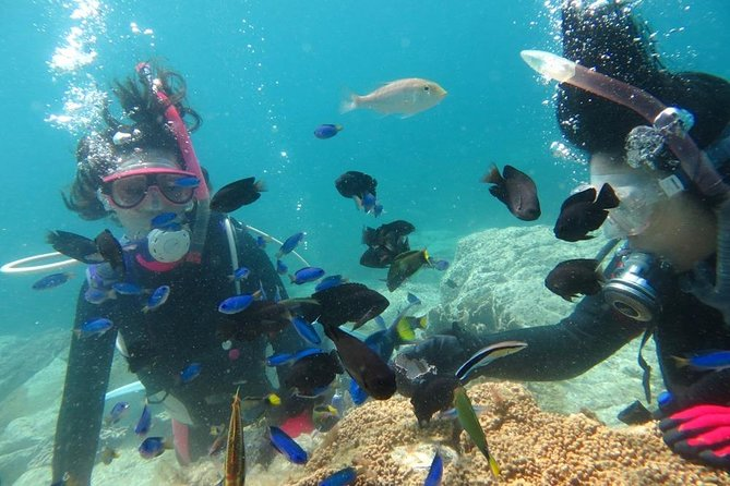 【Kagoshima・Diving】Beginners welcome! Experience diving in Kagoshima.