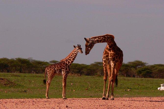 5-Day Tanzania Budget Camping Safari from Arusha