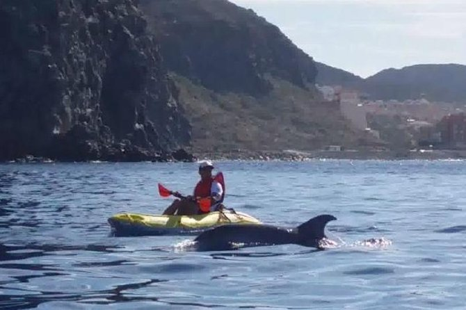 Kayaking ECOTOUR Adventure with dolphins and snorkelling with turtles