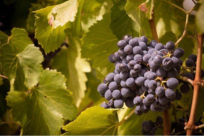Full Day Pont du Gard, Orange theatre, Wine Tasting including lunch from Avignon