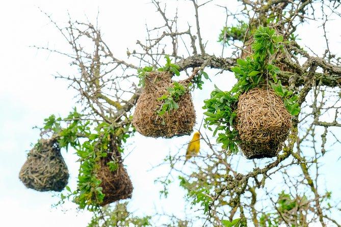 Cape Town Birding Trip - Private Nature Tour