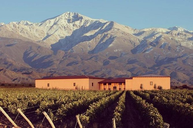 Vineyards with Wine Tasting in Mendoza