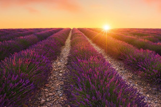 Dinner with private chef in a lavender field