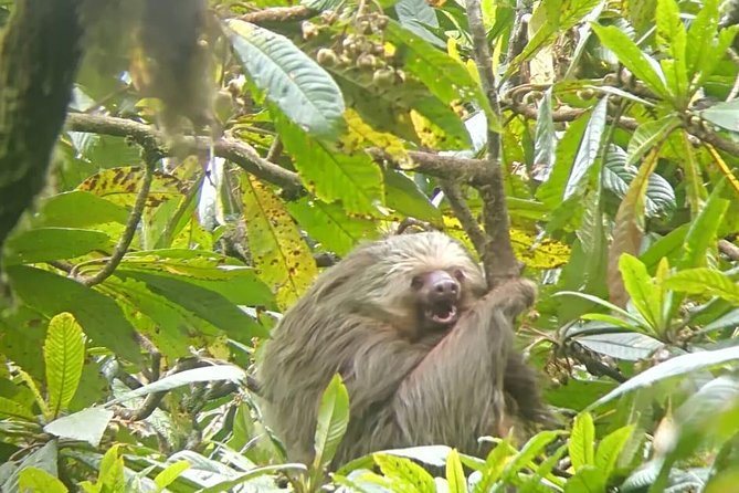 Monteverde Curi-Cancha Reserve Guided Tour