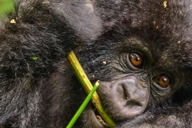 7 Days Queen Elizabeth National Park and Primate Safari