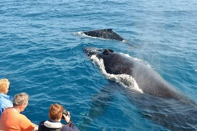 Whale watching Day Tour from Colombo