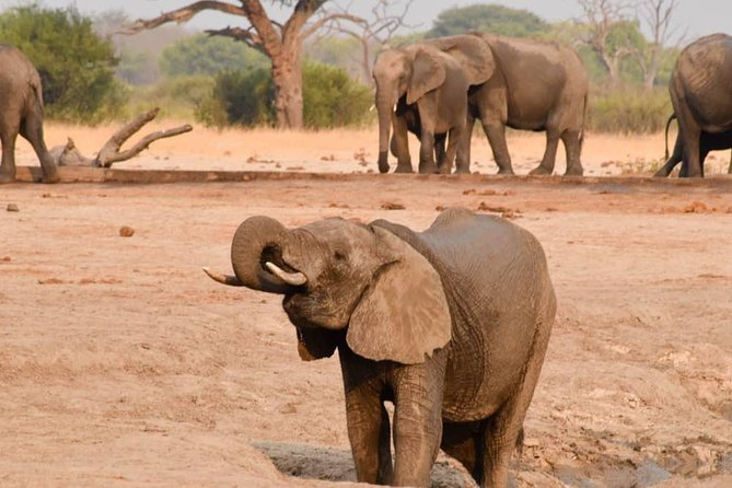 Wildlife and nature, Victoria Falls, Hwange, Chobe day trip 6 nights.