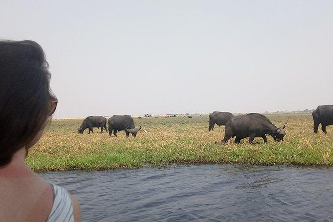 Chobe full day in Botswana best activity cruise ,lunch and game drive included..