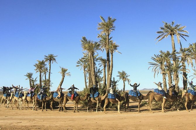 Camel Ride in Palm Groves of Marrakech