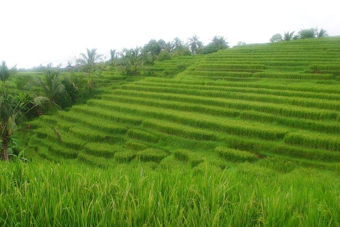 Belimbing-wangaya Gede 9 Hours Trek