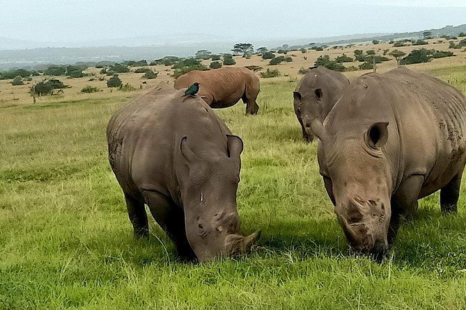 Wildlife safari & Conservation Projects