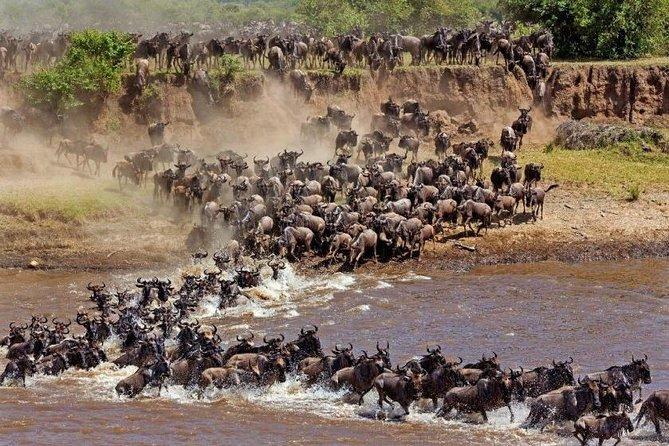 Private 11-Day Tanzania Great Migration Safari from Entebbe