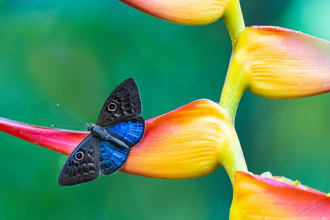 Kuala Lumpur Parks and Gardens Tour - Visit Bird Park, Butterfly Park & Gardens