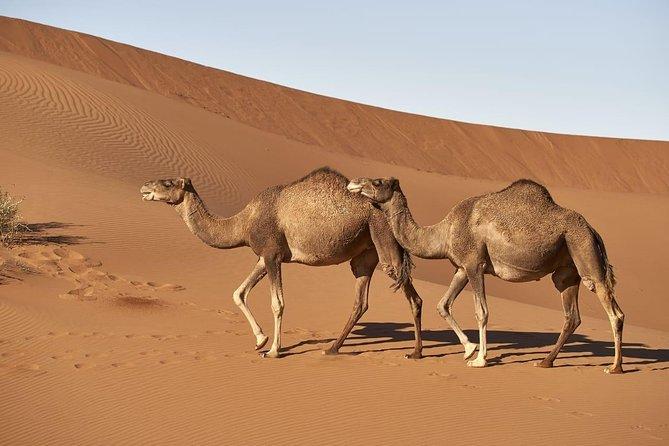 4x4 South Morocco and Sahara Desert private tour