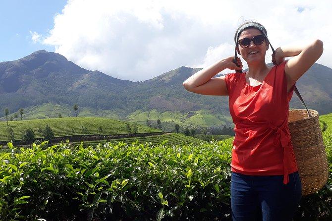 Tea cultivation programme