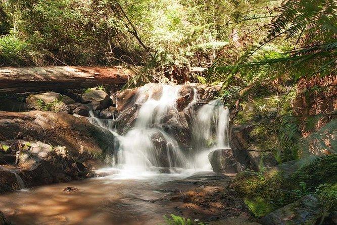 Discover Tour: Dandenong Ranges & William Ricketts Sanctuary