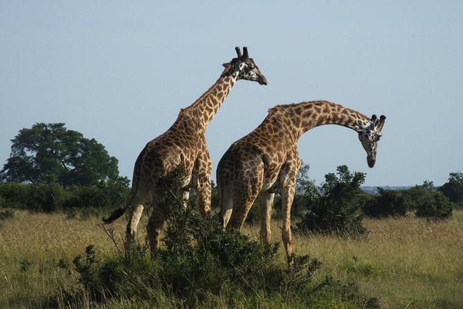 09 Days Explorer Kenya Safari.