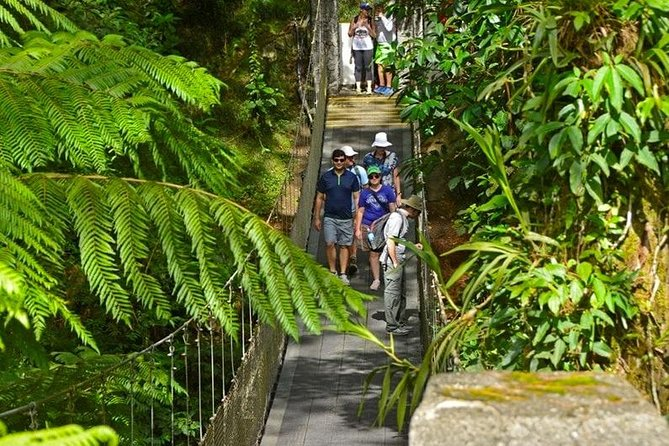 Arenal Observatory Hike and NATURAL Hot Springs