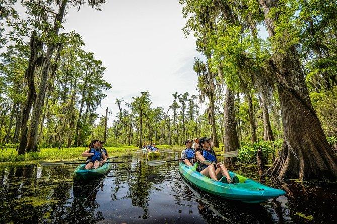 Het ontdekken van Manchac Swamp een Local Guided Small Group Kayak Tour