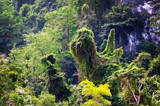 Los Haitises National Park – Hiking 4 Hours Moist Forest Trail.