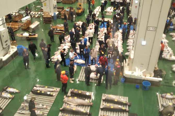 Tuna auction at Toyosu Market with qualified guide and early morning tour of Tsukiji Outer Market