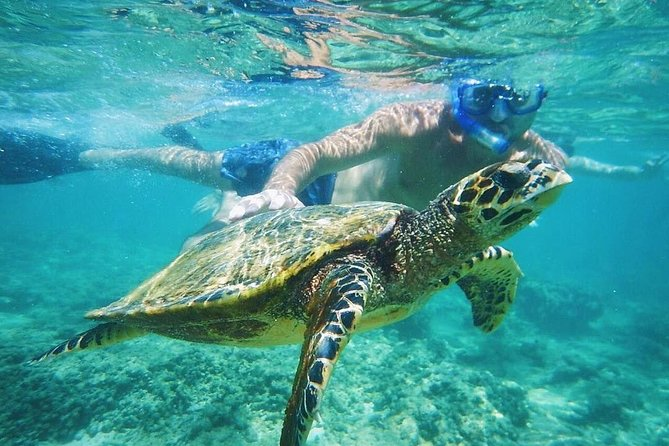 Ultimate Circle Island Snorkeling Tours