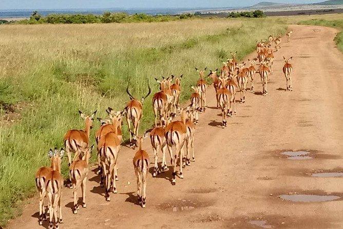 5-Days Crescent island, Hell's gate, Lake Naivasha and Amboseli Adventure