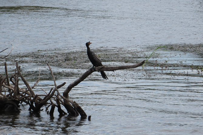 Zambezi River Bird watching