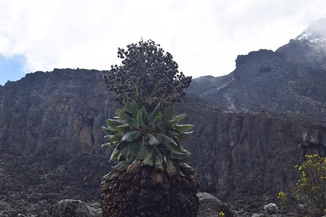 Mt Kilimanjaro hiking from Ausha, Tanzania