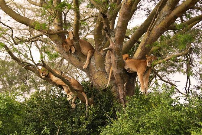 Tarangire, Serengeti and Ngorongoro Crater