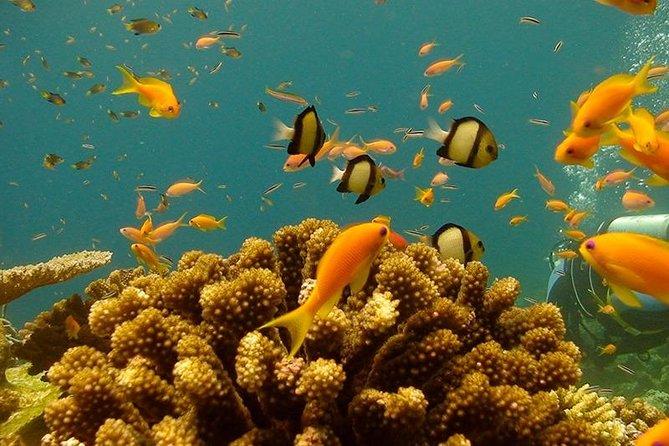 Pemba Tanzania Scuba Dives / 7 Days