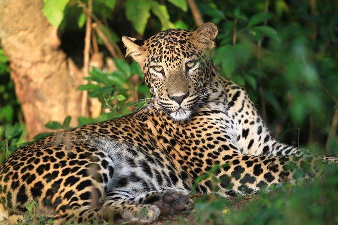 Wilpattu National Park Safari From Kandy