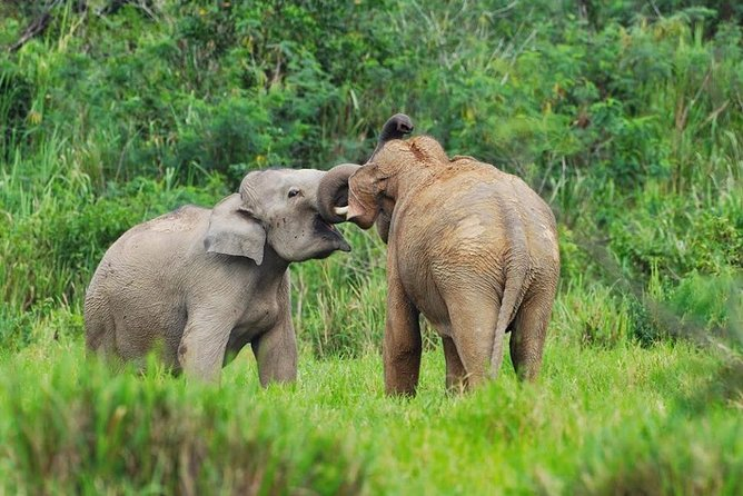 Wild Elephant watching at Kuiburi National Park Private Trip