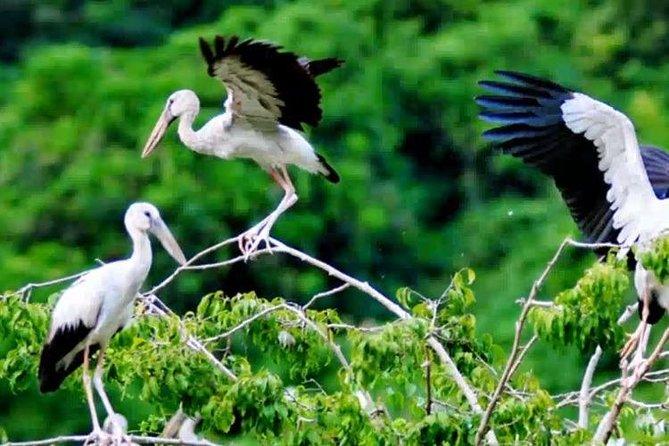 Ninh Binh Bird Call 2D1N
