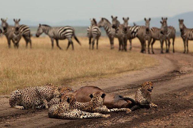 Easter Spectacular Safari