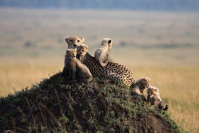 3 Days Masai Mara Safari – Daily Departures