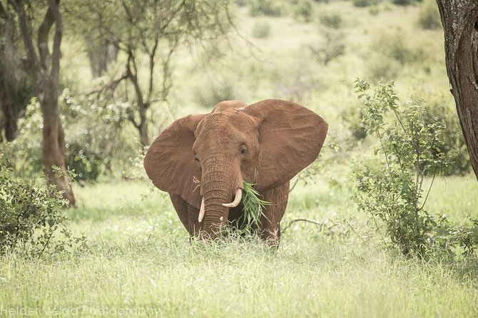 This Will Make You Explore Tanzania National Parks