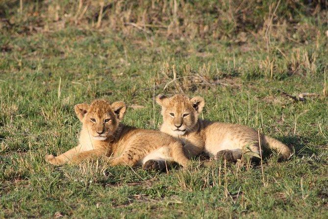 3 Days Safari - Masai Mara - Midrange - Safari Van