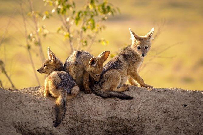 Tanzania safari (3-day)