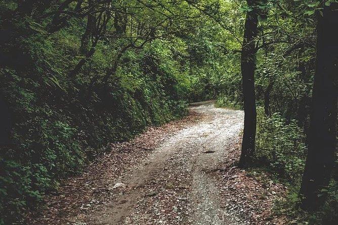 Seegreen Wish Walk - a Short hike in Queen of the Hills, Mussoorie