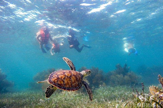 Private Turtle Swim