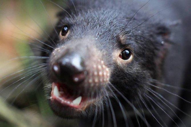 SYDNEY: Wild Life Sydney Zoo!