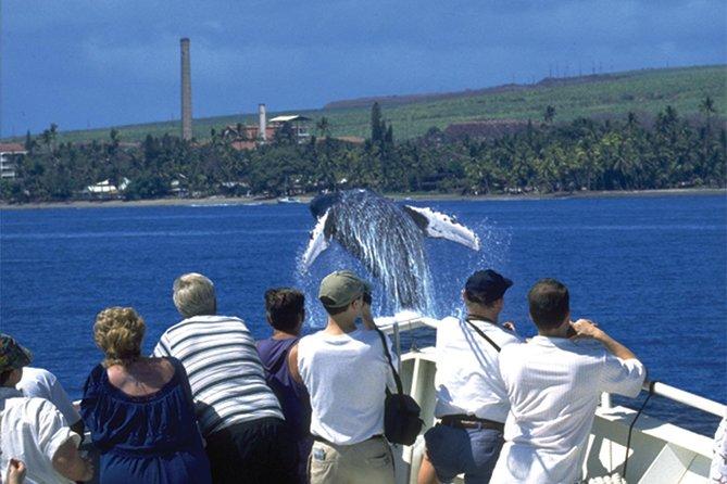 Cruzeiro de Observação de Baleias em Maui