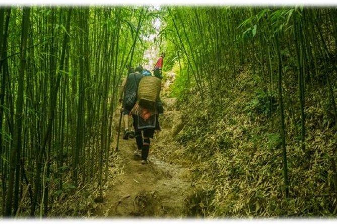 1D The Bamboo Trek
