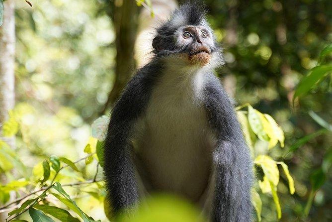 Monkey Business 3 days - 2 nights Jungle trekking (including rafting)