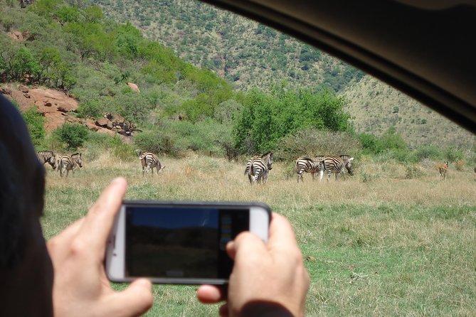 Pilanesberg Safari Tour
