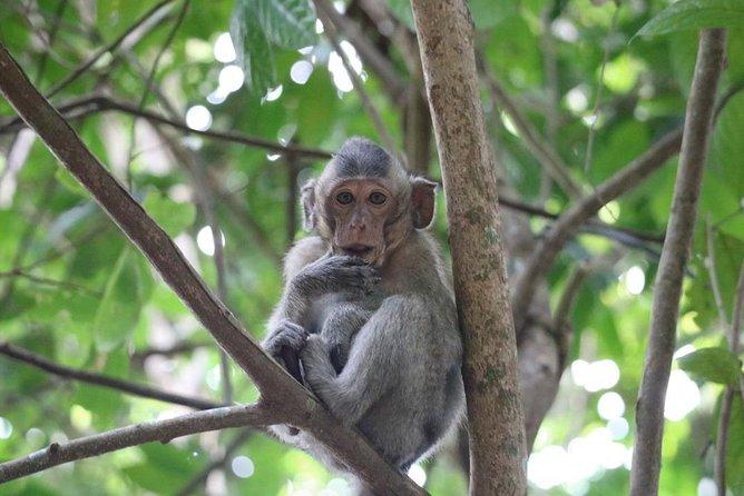 Guided Kep National Park walk - by Knai Bang Chatt