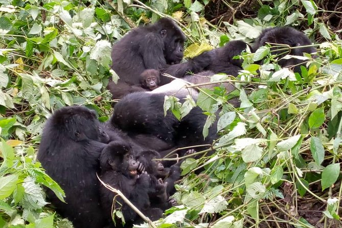 7-Day Gorillas, Chimps, Big 5 & Big Cats Tour