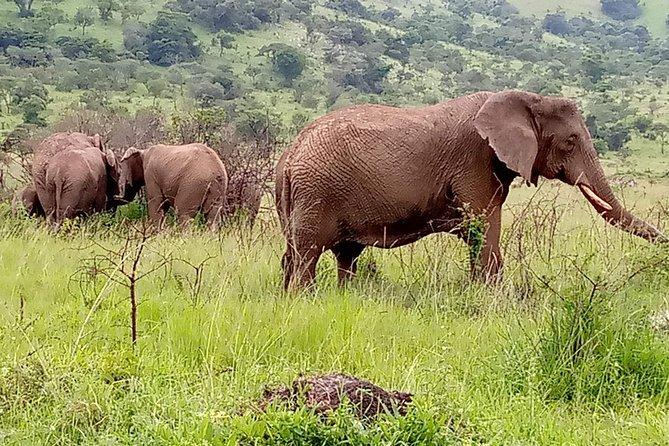 7-Day Epic Gorillas, Chimps, Big 5 & Big Cats Safari