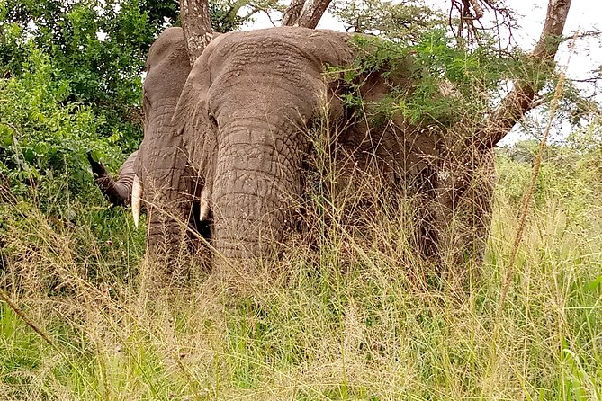 7-Day Big 5 & Big Cats, Murchison Falls, Kidepo NP
